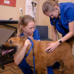 pet care and wellness plan at south tampa vet