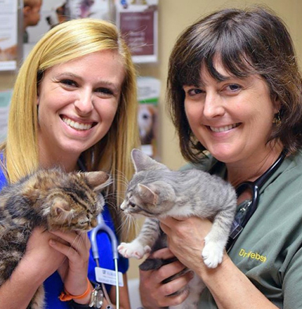 spay and neuter your pet with our vets