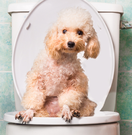 our expert vets can test your pets poop