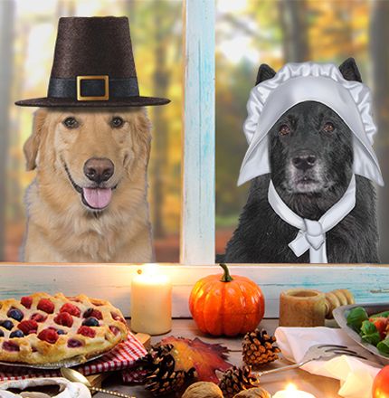 thanksgiving with your pets