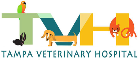 Check Your Pets Urine - Expert Vet Inspections In South Tampa