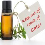 essential oils dangerous to animals