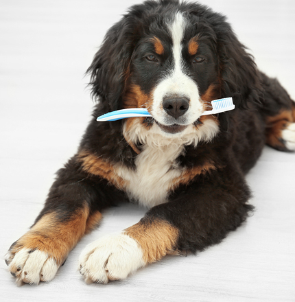 dogs dental cleaning